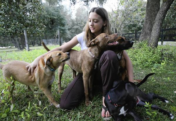Halie Weber poses with some of her rescued dogs on Tuesday, October 2, 2012. The 16-year-old dual-enrollment student from Groveland , has made it her mission in life to save as many dogs and cats as possible from being euthanized at the Lake County Animal Shelter. She goes to commission meetings, has lobbied seven government agencies, waged an eloquent letter-writing campaign and met personally with commissioners.