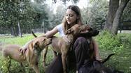 It began last summer when Halie Weber went to adopt a dog. Then 16, Halie and her mother were trying to choose from a pair of pooches at Lake County Animal Services when they learned that the one left behind would be euthanized the next day — along with at least a dozen more.