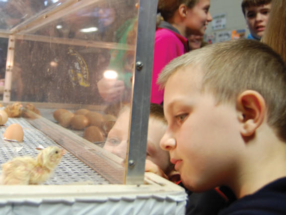 Lancaster County, Pa., brothers Mason and Andrew Pavelik come face to face with a chick hatched just seconds earlier Sunday at the Pennsylvania Farm Show. The Farm Show in Harrisburg, Pa., continues through Saturday.