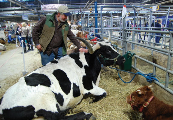 Randy Sutton of Blue Ridge Summit, Pa., checks on his cow, Sena Field, during the Pennsylvania Farm Show in Harrisburg, Pa., on Sunday.