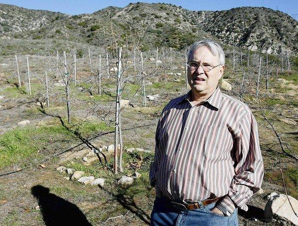 William Johnson, of La Canada, in a plot of about 465 5-year-old persimmon trees he planted on Edison-owned 'Open Space' on January 2, 2013.