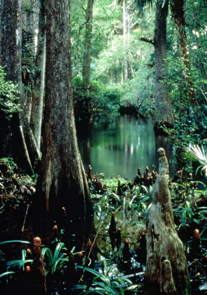 Fakahatchee Strand Preserve State Park is located in Copeland, Fla. and offers a wide array of plant and wildlife.