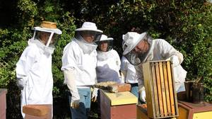 Funds and classes can help you become backyard beekeeper