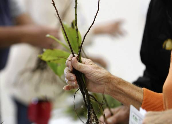 The Lake Soil & Water Conservation District, in partnership with the state Division of Forestry sponsored a bare-root tree seedling give away on Thursday, January 20, 2011, at the Lake County Agricultural Center in Tavares . ( Tom Benitez/ Orlando Sentinel )
