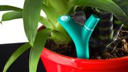 CES 2013: Flower Power lets plants communicate their needs