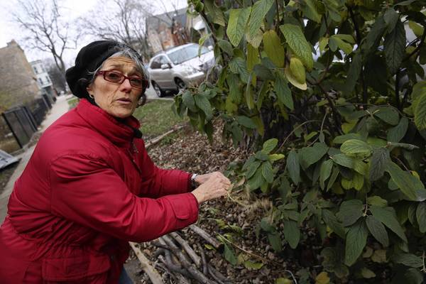 Chicagoan Kathy Cummings was once awarded a prize from the city of Chicago for her natural landscape. Recently she was fined over $600 by the city for having weeds in her front yard.