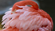 Flamingo Gardens in Davie hosts fundraiser