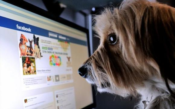A dog stands in front of a computer screen with a Facebook page.