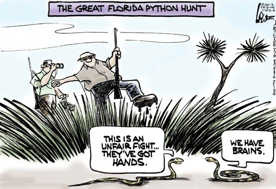 The great Florida python hunt