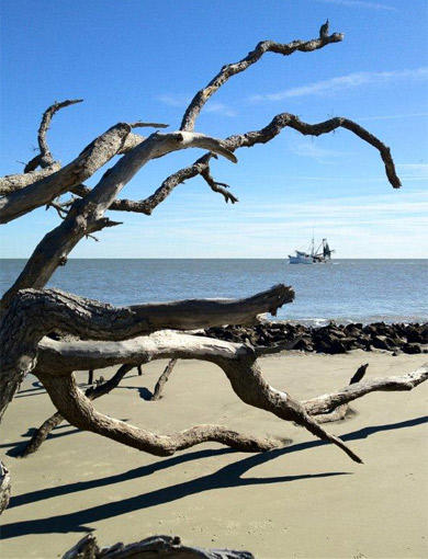 My Best Shot -- Jekyll Island, Ga.