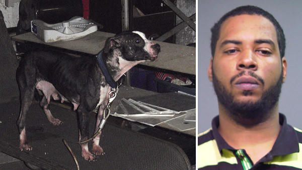 Jarcivius Taylor, 28, of the 12800 block of S. Green St. was arrested and charged with aggravated cruelty to animals.