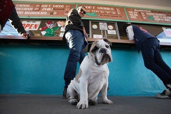 Matt Harper, 22, of Valley Village and his English bulldog Pearl wait for their meal on the last day of business at Henry's Tacos in Studio City. The taco stand featuring Googie-style signage had operated in that location since 1961.