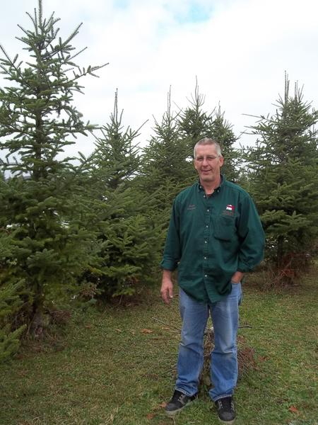 Scenic View manager Steve Spagina stands among the Christmas trees he helps to care for and sell on the tree farm just outside of New Centerville.