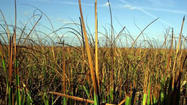 Pictures: Plants in the Everglades