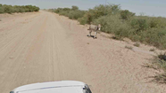 Google Street View photo of donkey in Botswana.