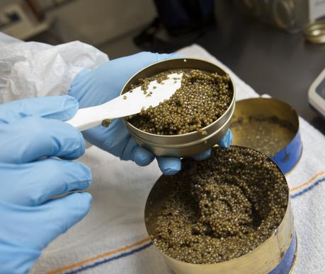 Caviar ready for consumption is packaged at Sterling Caviar in Elverta, Calif. It is the largest caviar producer in the United States.