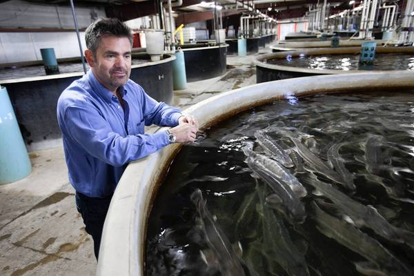"Enrique Castaño, shown by a tank of young sturgeon,  is managing director of Sterling Caviar in Elverta, Calif. He said that although the retail price of caviar may seem high, there isn't as much profit in it as people may think. ""We spend as much on electricity as a small city in the United States,"" he said."