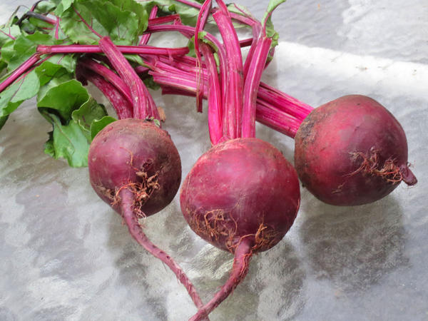 Garden Keeper photo: Beets Beets grow best when planted in a bed with loose, stone-free soil with a pH of about 6.2 and lots of sunlight.