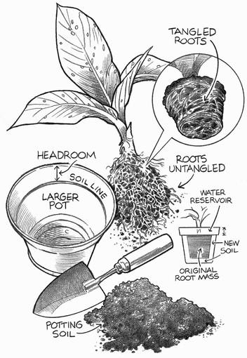 How to repot a houseplant