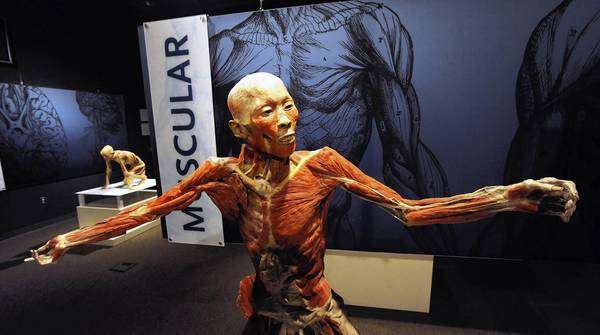 'Bodies Revealed' at Da Vinci Science Center in Allentown continues through Feb. 18.