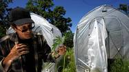 Mendocino County spars with feds over conflicting marijuana laws