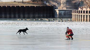 Dog stranded on ice