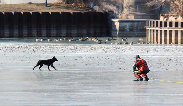 Chicago Police try to rescue a dog stranded on the frozen pond at the Jackson Park Yacht Club on Chicago's South Side.
