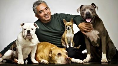 Dog Whisperer Cesar Millan coming to Miami Beach