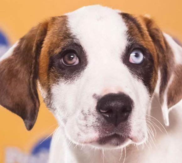 'Puppy Bowl IX': Meet the 2013 starting lineup: Breed: Catahoula Leopard Dog mix  Age: 13 weeks