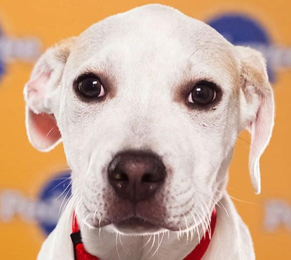 'Puppy Bowl IX': Meet the 2013 starting lineup: Breed: Pit Bull/Hound mix  Age: 13 weeks