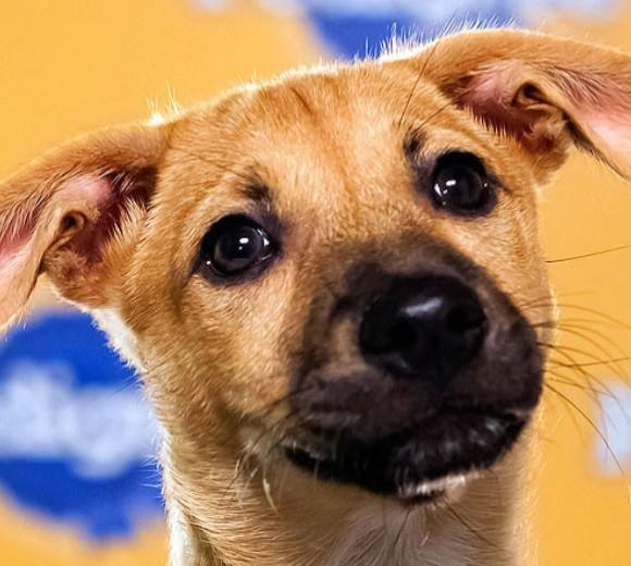 'Puppy Bowl IX': Meet the 2013 starting lineup: Breed: Puerto Rican Sato  Age: 12 weeks