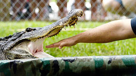 <b>Database:</b> Search incidents of alligator bites in Florida