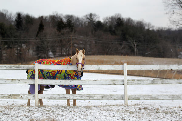 A horse stays warm at Patapsco Horse Center in Catonsville on Thursday, Jan. 24.