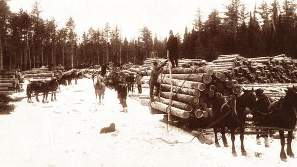This scene showing the loading of logs was indicative of the bustling lumber era.