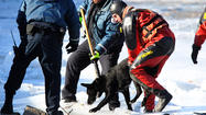 A dog rescued after going after a Canada goose on an iced-over Jackson Harbor was reunited with its owner Friday afternoon, an official said.