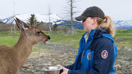 On Friday, the Alaska Wildlife Conservation Center mourned the loss of Jewelie, a Sitka black-tail deer, in Portage.