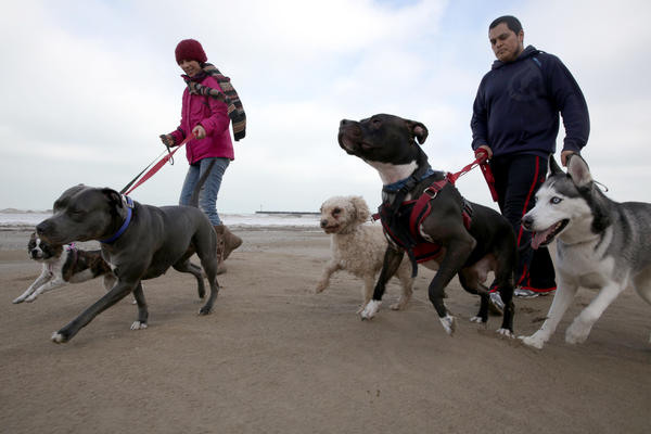 Georgina Salgado, left, and Jacinto Oreja, take advantage of the warming weather on Monday to take their five dogs for a walk on the 63rd Street Beach.