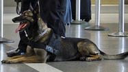 Secret Service dog falls to its death in New Orleans