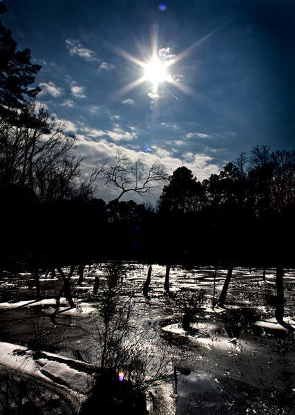 Views of the melting ice and wetlands vegetation at Newport News Park Lake this morning after the sunlight broke through the cloud cover.  The warm temps and sunlight are quickly melting what little ice and snow that remains from Friday's snow.