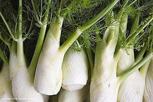 No matter how delicious cooks may find fennel, it is classified as an invasive species in Southern California.