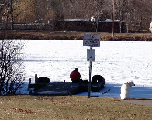 A dog sits by the frozen pond at Mill Pond Park.