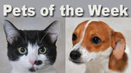 Meet Aladdin and Whitney, our featured pets for this week.