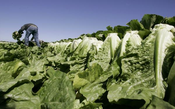 A CDC study says leafy greens accounted for the most food-borne illnesses from 1998 to 2008. But don't stop eating them!