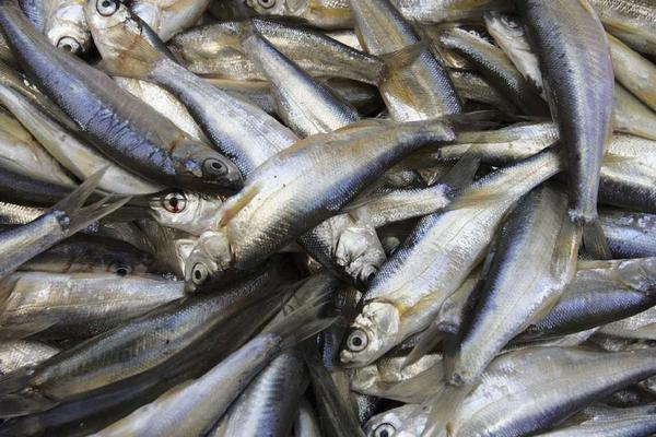 Fresh sardines are part of a healthful Mediterranean diet, which is the eating regimen that subjects followed in the study.