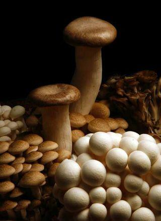 Mushrooms.