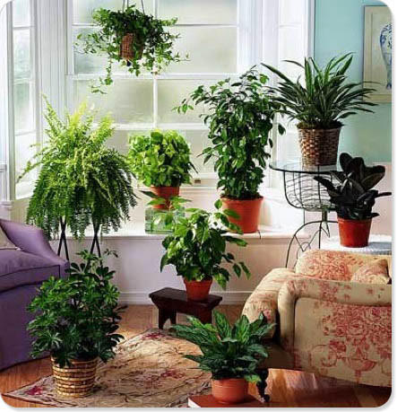 Houseplants are good for home and office.