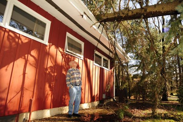 """It was brutal last night,"" says Harry Heymann of Westbrook Road in Bloomfield about the wind storm. He says he was in the bathroom (he is standing next to the bathroom window )at 5 a.m. when this blue spruce tree fell directly overhead. He believes the roof overhang saved him from injury."