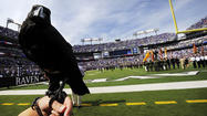 When it comes to Super Bowl XLVII, it seems everyone is willing to put some skin in the game. Or at least a little ego. (Yes, we're talking about you, Mayor Hancock.)