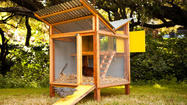 'Reinventing the Chicken Coop': DIY shelters for modern nesting