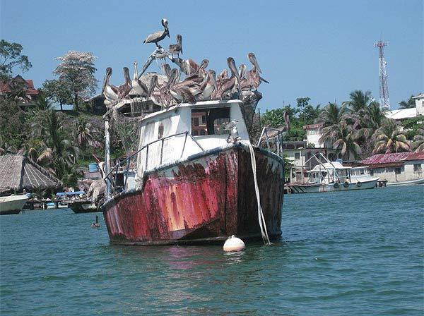 "This photo of pelicans roosting on a boat was taken by Jack and Carol Walters while on a Caribbean cruise. ""We stopped in Guatemala and took a side trip to a village. This was the view of the marina as we approached by boat,"" says Jack and Carol."